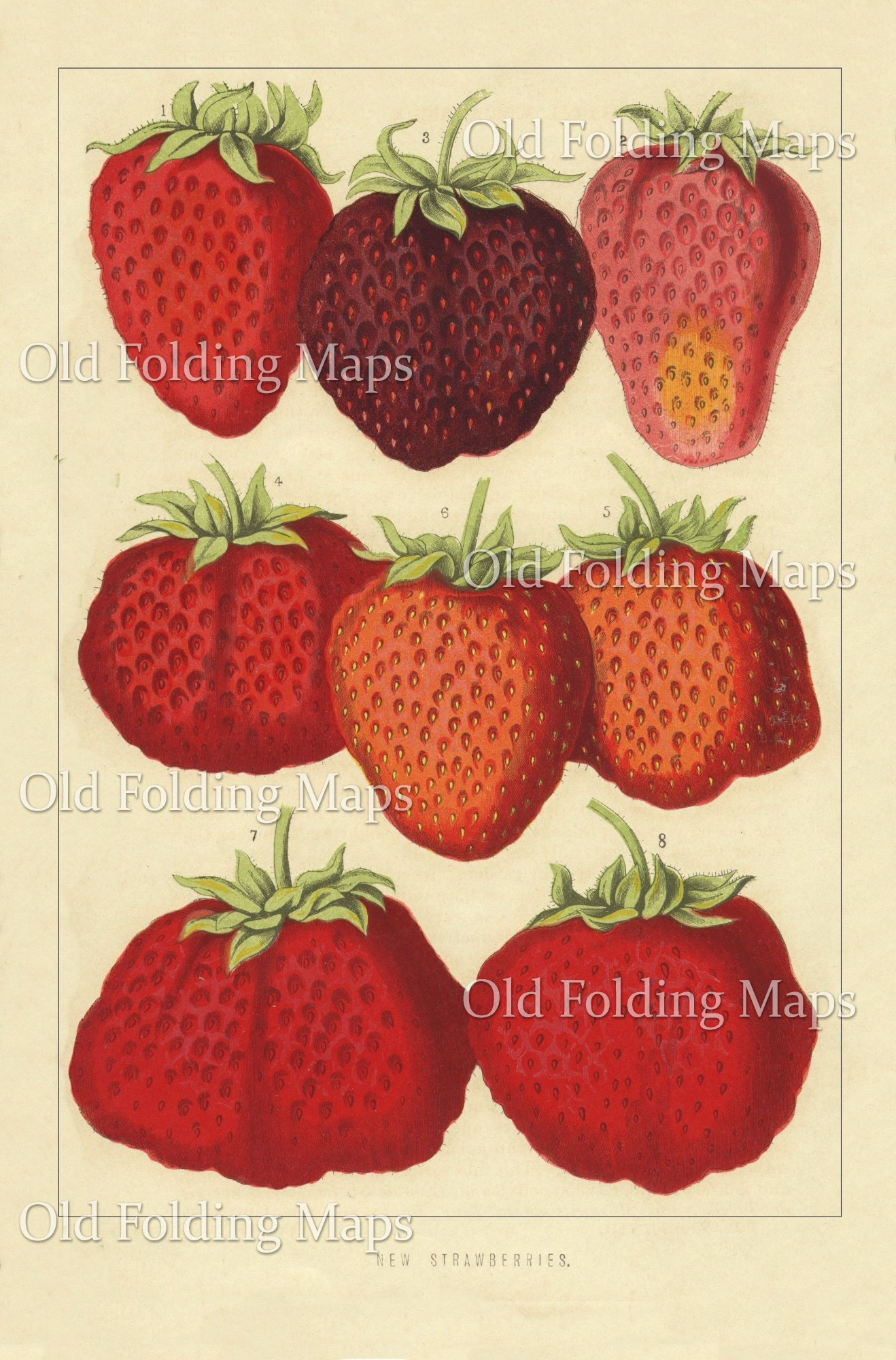 Antique Illustration of Fruit - New Strawberries circa 1880