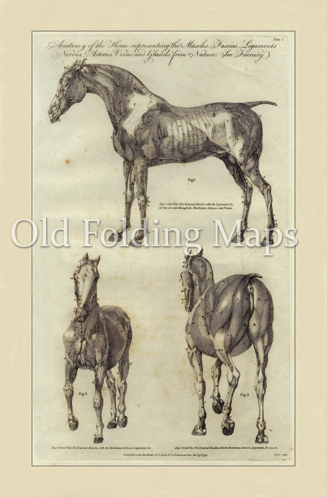 Antique Illustration of Animals - Anatomy of a Horse I circa 1790