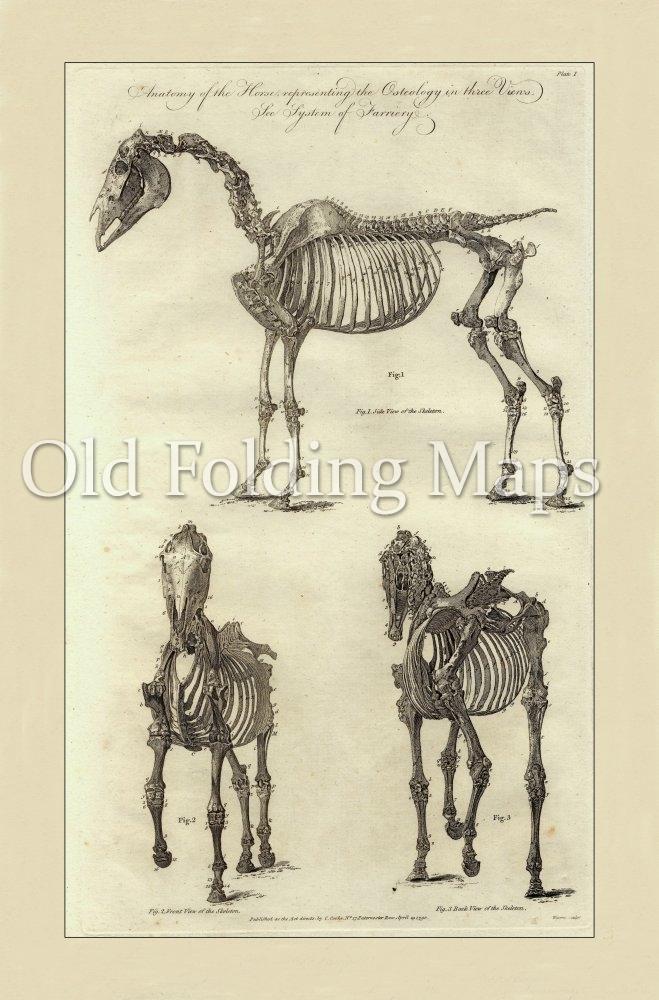 Antique Illustration Of Animals Anatomy Of A Horse Iv Circa 1790